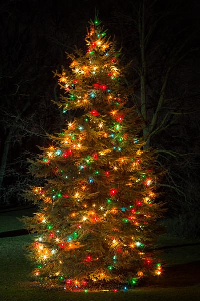 North Aurora Tree