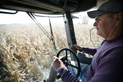 Arnie Ralston picks corn at some of the Ralston's farm land located on IL route 130 about ten miles south of Charleston, Illinois on Saturday, November 1, 2008.  (Jay Grabiec/Staff Photographer)