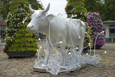 Light Cow Ventspils