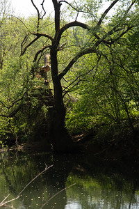 Bretonne dans arbre