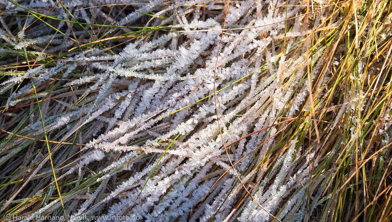 iskrystaller på gess i fjæra