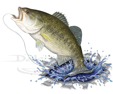 Jumping Bass