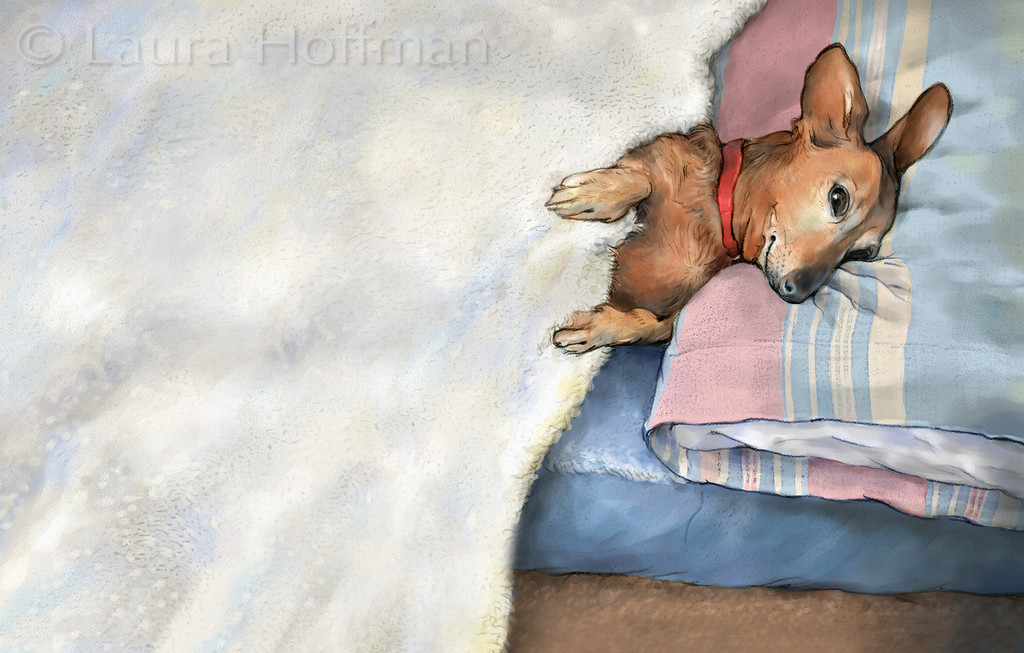 Penelope in Bed<br /> Dust Cover for Childrens Book<br /> All Rights Reserved, copyright Laura Hoffman, 2012