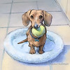 Dachshund Puppy with Tennis Ball<br /> Mixed Media<br /> Copyright Laura Hoffman