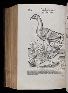 Author: Conrad Gessner Title: Historiae animalium lib. I. De quadrupedibus uiuiparism (Zurich, 1551) Shelfmark: F.10.2  (catalogue record)