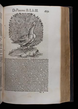 "<b>Author:</b> Conrad Gessner<br> <b>Title:</b><i> Historiae animalium lib. I. De quadrupedibus uiuiparism</i> (Zurich, 1551)<br> <b>Shelfmark:</b> F.10.2 <a href=""http://idiscover.lib.cam.ac.uk/primo-explore/fulldisplay?docid=44CAM_ALMA21392185550003606&amp;context=L&amp;vid=44CAM_PROD&amp;search_scope=SCOP_QUE&amp;tab=cam_lib_coll&amp;lang=en_US""> (catalogue record)</a>"