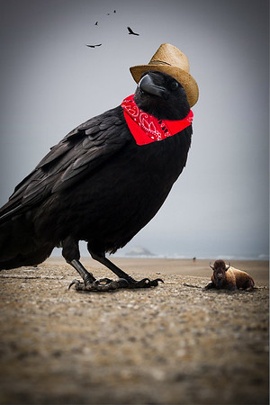 Cowbird Orville