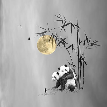 ENDANGERED Panda Bears