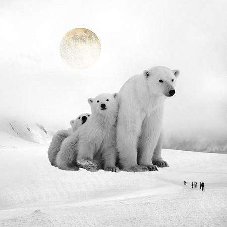ENDANGERED Polar Bears