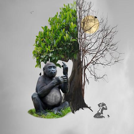 ENDANGERED Lowland Gorilla