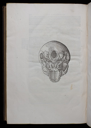 Bottom view of human skull