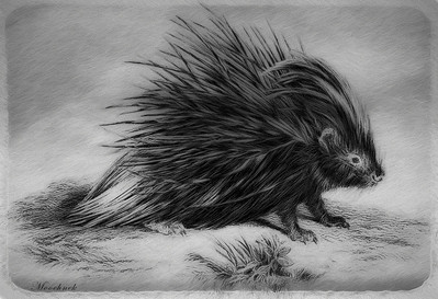 Mr Porcupine...