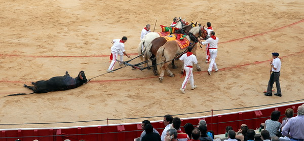 Bullfight, not a fan.