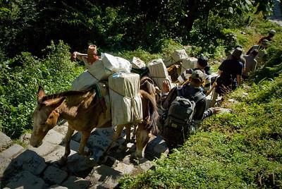 Mule traffic jam