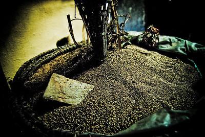 Ground millett