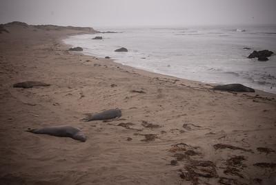 Seals chillin