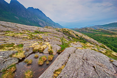 Moss and cottonsedge growing on rocks on the coastal fjell