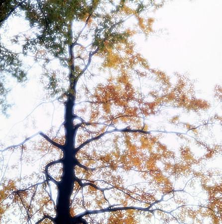 Beech tree in autumn sunshine