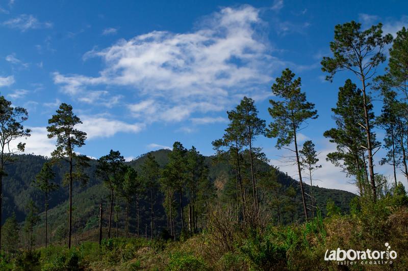 """Naturaleza Viva"" - Valle del Tetero 2014"
