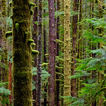 Port Renfrew Forest