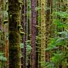 Port Renfrew Forest