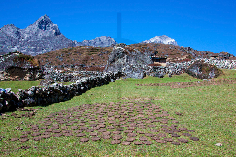 Dung cakes, Solukhumbu District, Nepal