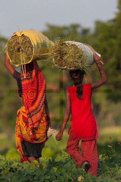 Women carrying fresh grasses out from Kshi Tappu Wildlife Reserve, Nepal