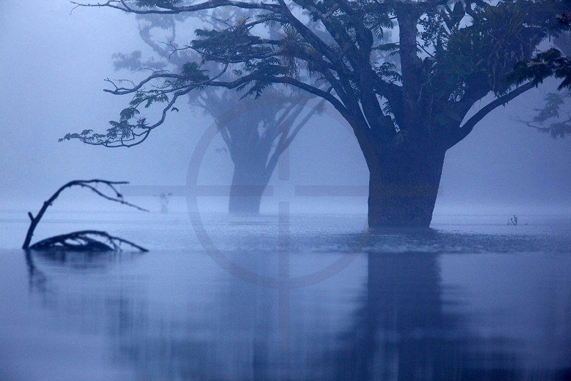 Laguna Cuyabeno in early morning fog, Cuyabeno Faunal Reserve, Ecuador