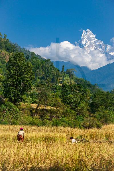 Machapuchare as seen from Naya Pul, Nepal