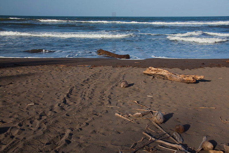 Green sea turtle track on beach, Tortuguero National Park, Costa Rica