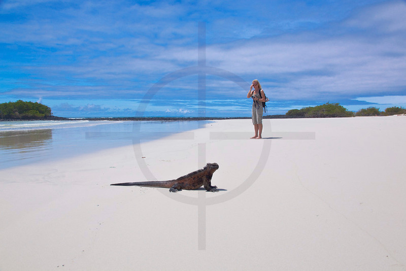 Tourist and marine iguana, Playa Tortuga near Puerto Ayora, Santa Cruz Island, Galápagos Islands, Ecuador