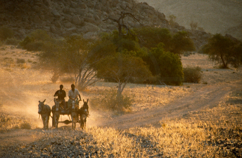 Donkey cart on dirt road in late afternoon, Namibia