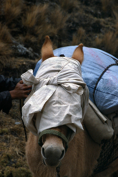 Fifty ways to pack a mule, Apolabamba South trek, Bolivia