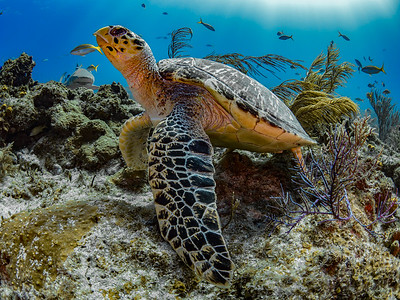 Hawksbill and Company