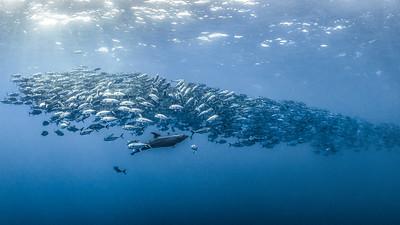 Dolphin Reverie