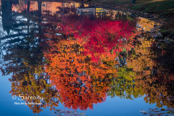 Amazing early morning Fall Reflections in the pond at Deming Park!