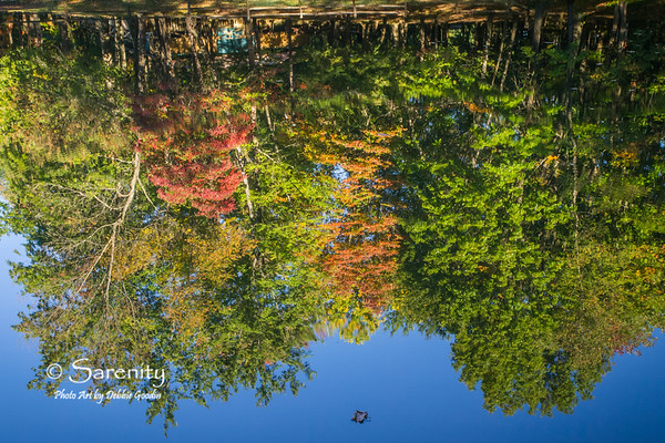 These mirror like reflections in the surface of Maple Avenue Lake!  The only give away is the floating leaf on the water's surface!
