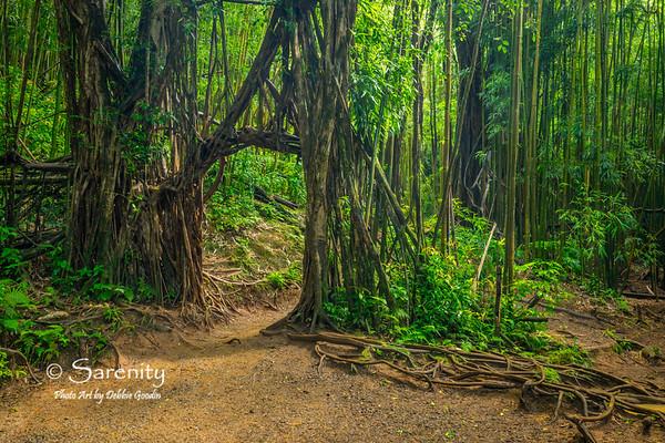Banyan Doorway