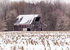 I love the way the snow emphasizes the missing boards on the roof of this barn, showing the years of neglect!