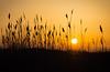 Grassland Golden Sunrise