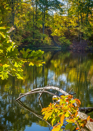 The Fall colors in the foreground, and dead tree in this photograph lead you to the reflections in the water and across to the stairway in the distance surrounded by golden leaves!