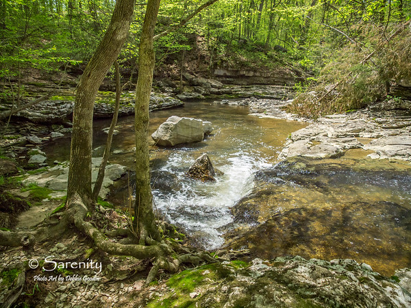 "I love the tree roots and small waterfall in the foreground, and the rock shelf layers in the background of this photo titled ""Spring Creek Visions"" captured in McCormick's Creek State Park one beautiful Spring day!"