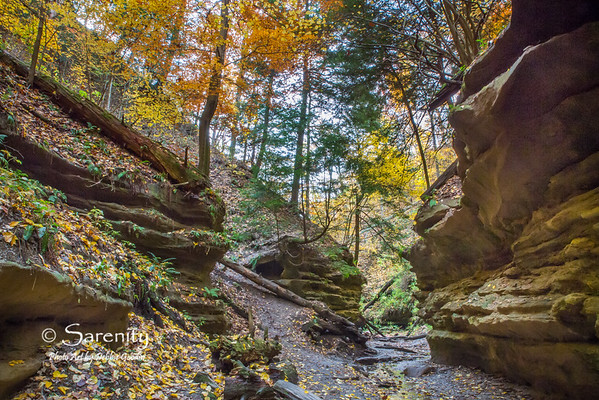 """""""Canyon of Red & Gold"""" was created one Fall Day on a hiking trail in beautiful Turkey Run State Park!   I love how the canyon walls come together to create an entrance to the trails path!  The stark contrast of Fall colors truly bring this canyon to life! I think the name says it all!"""