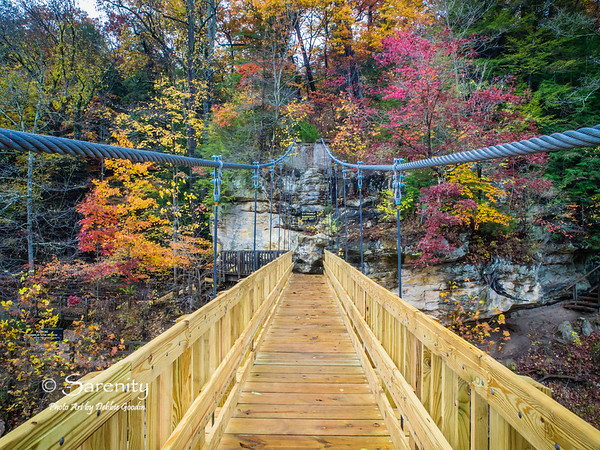 I love how the lines of the new suspension bridge at Turkey Run State Park pull your eye to this rock face decorated with vibrant Fall Colors!