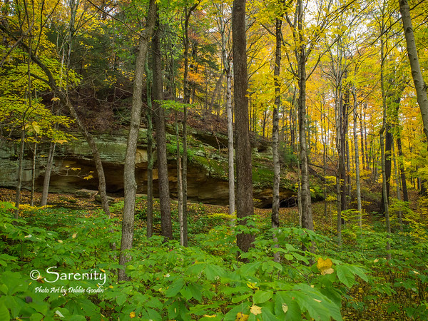 A beautiful Fall scene taken on Trail 5!