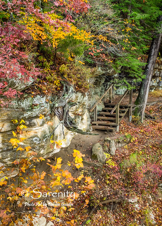 The tree roots extending out from the rock face, amazing fall colors and stairs leading to trail 8 in Turkey Run State Park make a fascinating picture!