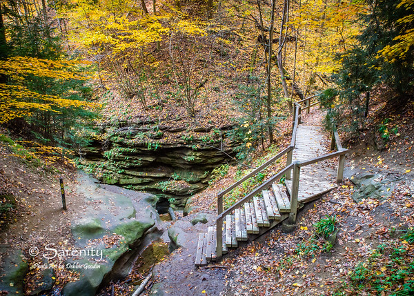 Stairs on a trail in Turkey Run surrounded by golden color!