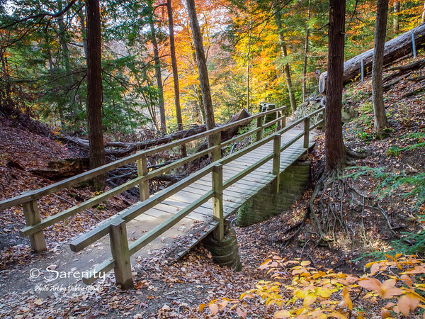 Beautiful colors surround this walking bridge!  I love the stone foundation and exposed root system in the tree by the bridge!
