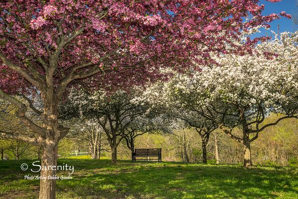 Turner Grove in full bloom.