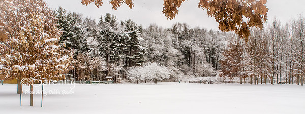 A snowy Winter scene captured at Dobbs Park!